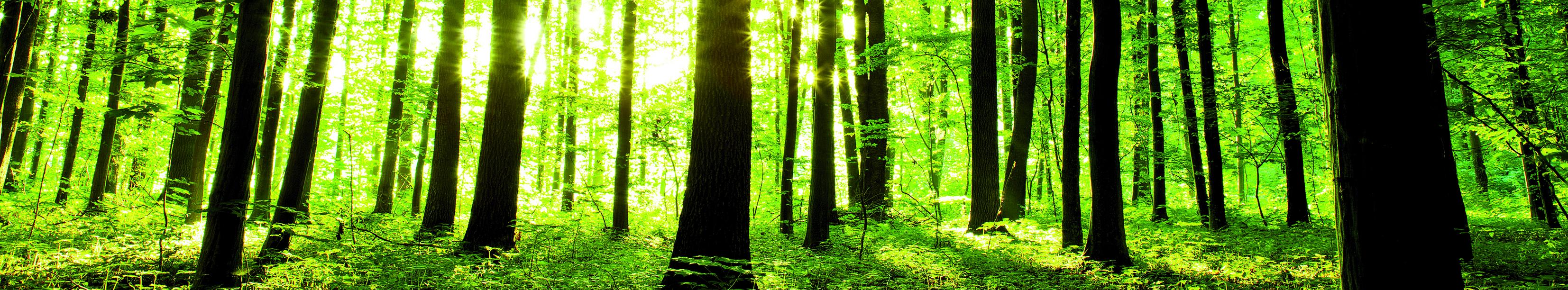 565_Dekor_Forest